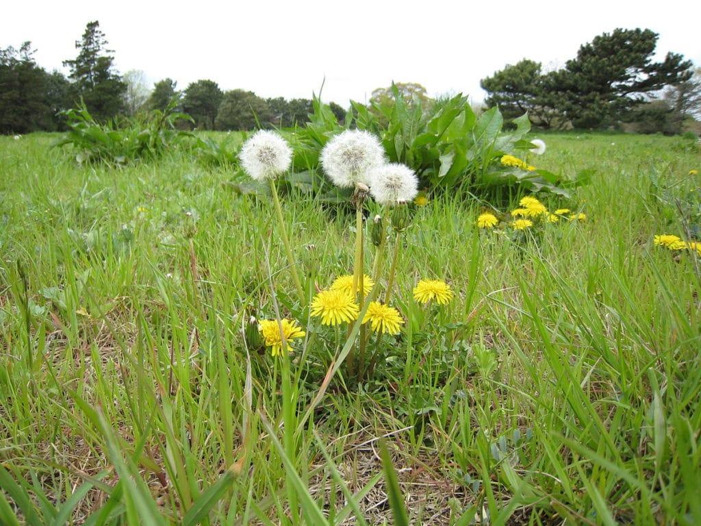 Лечение микоза травами