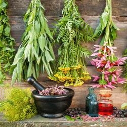 Травы от грибка: эффективные рецепты для внутреннего и наружного применения