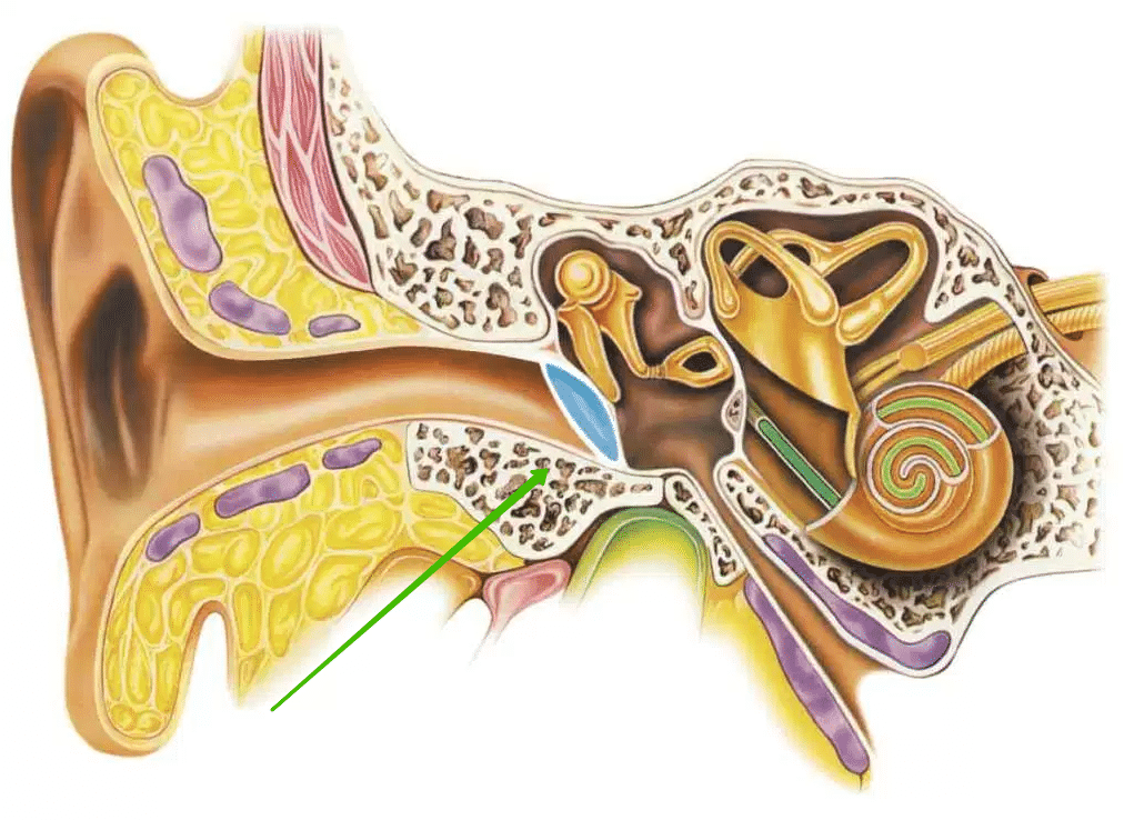Симптоматика микоза ушей