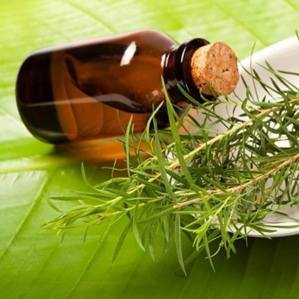 Чем эффективно и как применять масло чайного дерева от грибка ногтей