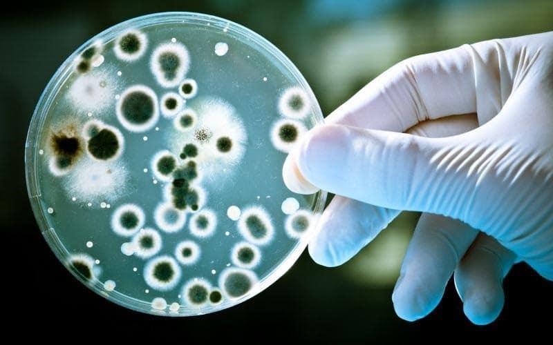 Лечение дрожжеподобных грибков рода кандида. Грибок кандида