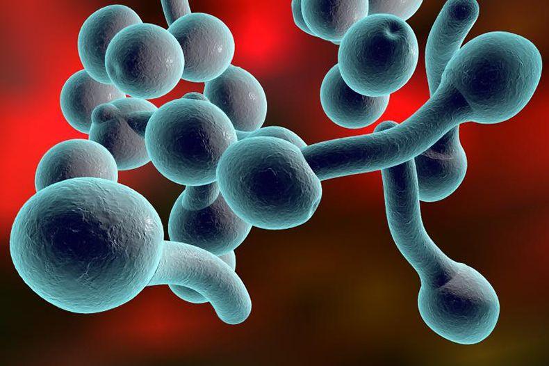 Грибковая инфекция в организме: симптомы и лечение