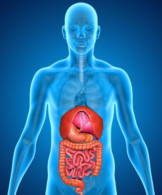 Кандидоз пищеварительной системы: какие тревожные симптомы указывают на это?