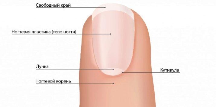 Структура ногтей: химический состав и деструктивные факторы